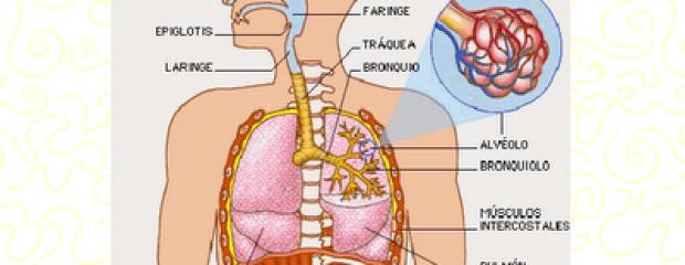 sistema respiratorio - Mapa Mental